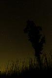 现出轮廓的树和草反对满天星斗的天空 免版税库存照片