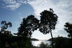 现出轮廓的树在凌家卫岛 免版税库存图片