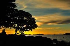 现出轮廓结构树和日落 免版税库存图片