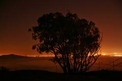 现出轮廓结构树 免版税图库摄影