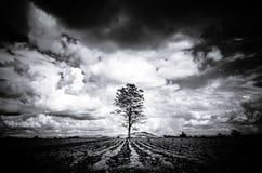 现出轮廓黑白大树背景山,黑暗的Sk 库存照片
