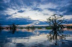 现出轮廓一个被充斥的密林和一些水生植物的日落在拉古纳重创,在Cuyabeno野生生物储备,亚马逊 免版税库存图片