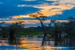 现出轮廓一个被充斥的密林的日落在拉古纳重创,在Cuyabeno野生生物储备,亚马逊盆地,厄瓜多尔 免版税库存图片