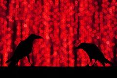 现出轮廓与欢乐迷离bokeh典雅的抽象backgro的乌鸦 免版税库存照片