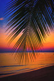 现出轮廓在海滩的可可椰子树在日落 免版税库存图片