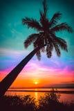 现出轮廓在海滩的可可椰子树在日落 库存图片