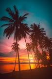 现出轮廓在海滩的可可椰子树在日落 图库摄影