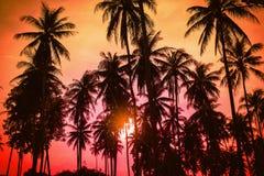现出轮廓在海滩的可可椰子树在日落 库存照片