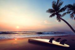 现出轮廓在热带海滩的冲浪板在日落在夏天 库存照片