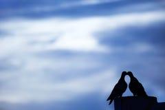 现出轮廓在蓝天的夫妇鸽子或鸠 免版税库存照片