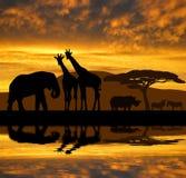 现出轮廓大象、长颈鹿、犀牛和斑马 库存照片