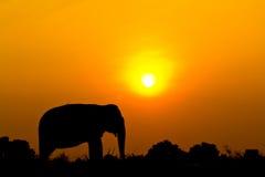 现出轮廓大象wiith日落场面 库存图片