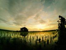 现出轮廓摄影师采取照片偏僻的房子的图象小组包围由绿色稻新芽在与可爱的sunris的新的季节 库存图片