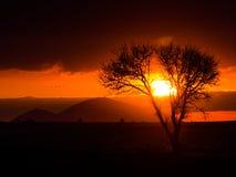 现出轮廓日落场面在死的树(选择聚焦)之间的 库存图片