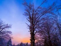 现出轮廓黄昏风景的树 图库摄影