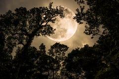 现出轮廓树分支反对与充分的moo的夜空 免版税库存照片