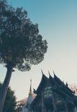 现出轮廓树和日落天空的射击图象 图库摄影