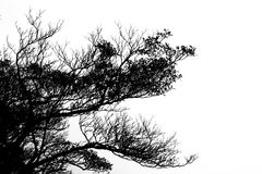 现出轮廓树枝反对天空 免版税库存图片