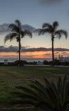 现出轮廓棕榈树在黄昏,日落被射击在科罗纳多海滩在有棕榈树的圣地亚哥 库存图片