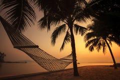 现出轮廓海滩摇篮摄影在椰子树的反对b 免版税库存照片
