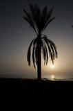 现出轮廓的棕榈 库存照片