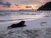 现出轮廓黑约克夏狗的画象在海滩的,使用由与完善的暮色天空的开掘沙子,酸值Kood海岛 库存照片