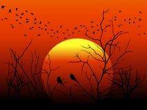 现出轮廓鸟和树枝在橙色太阳传染媒介设计 库存图片