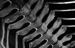 现存恐龙的骨头在天空中暂停了 库存图片