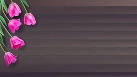 现实传染媒介五颜六色的桃红色郁金香在从板条的木背景设置了 不是踪影 与桃红色郁金香的模板为 库存图片