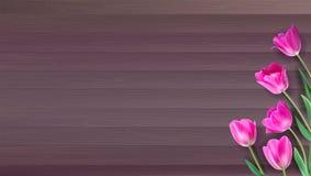 现实传染媒介五颜六色的桃红色郁金香在从板条的木背景设置了 不是踪影 与桃红色郁金香的模板为 库存照片