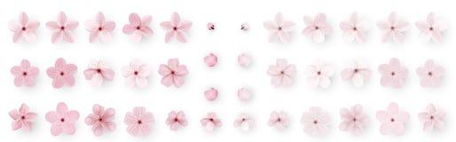 现实佐仓或樱花;日本春天花佐仓;桃红色樱桃花 向量例证