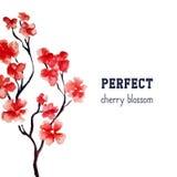 现实佐仓开花-在白色背景隔绝的日本红色樱桃树 传染媒介水彩绘画 剪报 免版税库存照片