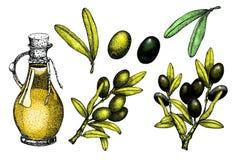 现实例证套黑和绿橄榄在绿色背景分支隔绝 橄榄油的,天然化妆品设计 皇族释放例证