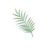 现实棕榈叶传染媒介被隔绝的标志 免版税库存照片
