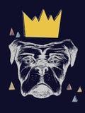 现实狗与冠和与灯光管制线和黑暗的背景 图库摄影