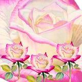 绘现实玫瑰的例证五颜六色的花水彩 免版税库存图片