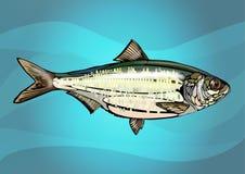 现实鱼 免版税库存照片