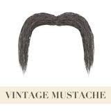 现实黑葡萄酒下垂的髭 免版税库存图片