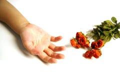 现有量下朵玫瑰 免版税库存图片