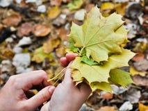 现有量叶子槭树妇女 免版税库存图片
