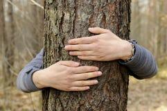 现有量拥抱结构树 免版税库存照片