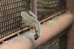 现有量猴子s 库存图片