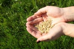 现有量种子 免版税库存照片