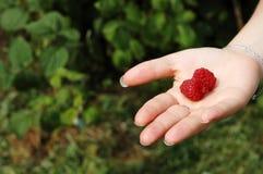 现有量莓二 免版税库存图片