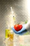 现有量藏品注射器蕃茄 免版税库存照片