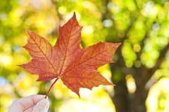 现有量藏品秋天叶子 免版税库存照片