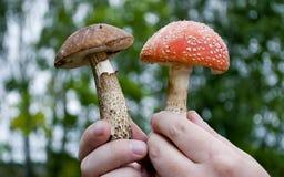 现有量蘑菇人员二 免版税库存图片