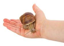 现有量蜗牛 库存图片