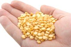 现有量豌豆 免版税库存图片