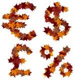 现金构成秋天查出的叶子符号 库存图片